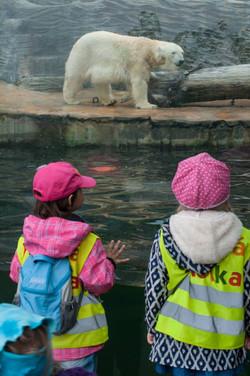 V zoo u ledního medvěda