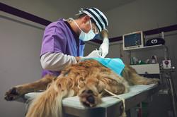 dog-in-the-animal-hospital-PGKV97E