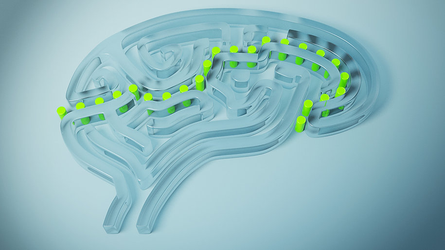 3D perspex model of a simplified brain in the shape of a maze with dots showing entry and exit points and pathway