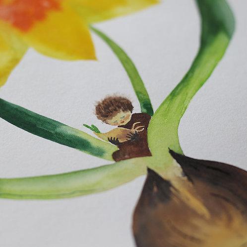 Akvarel Cibulník narcisový