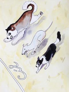 Psi v cíli
