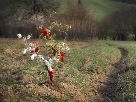 Květná neděle: odkud se vzaly kouzelné proutky a jak obnovit své kořeny