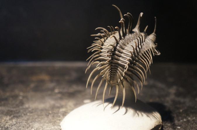 Trilobites du Dévonien du Maroc