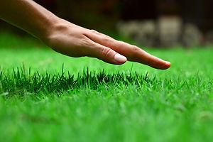 hand-on-grass.jpg