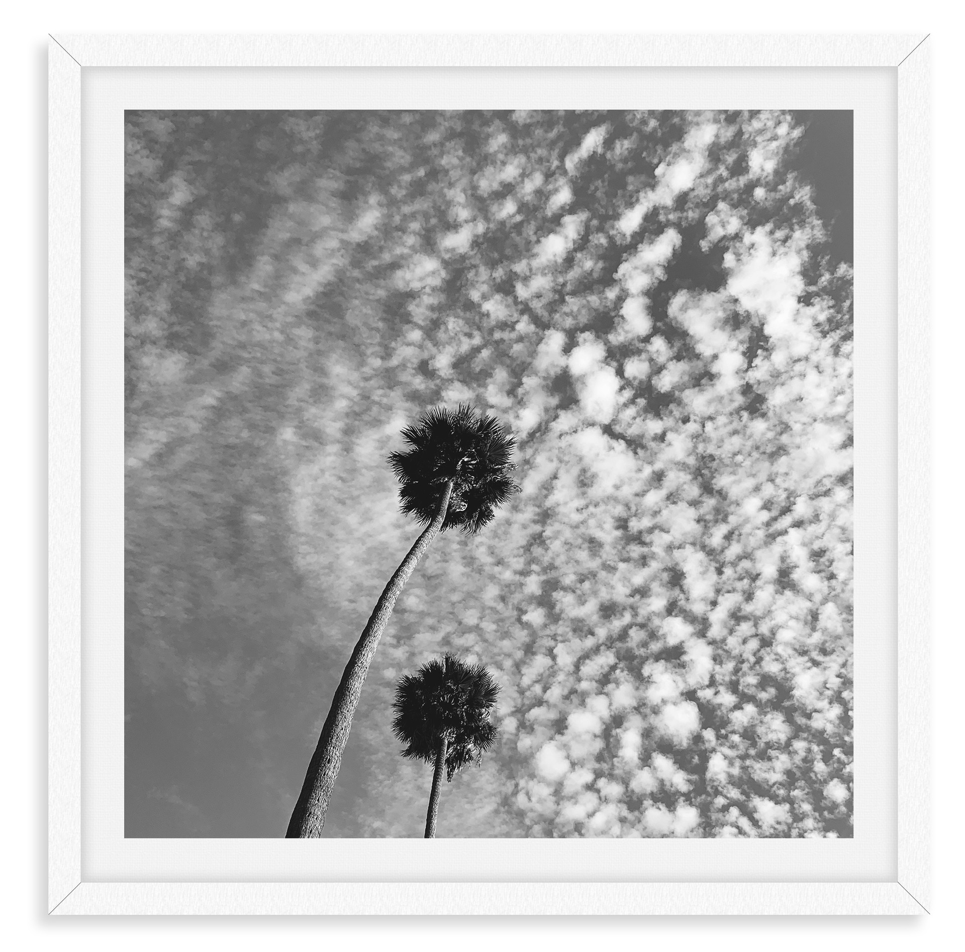 black and white palm tree clouds wall ar