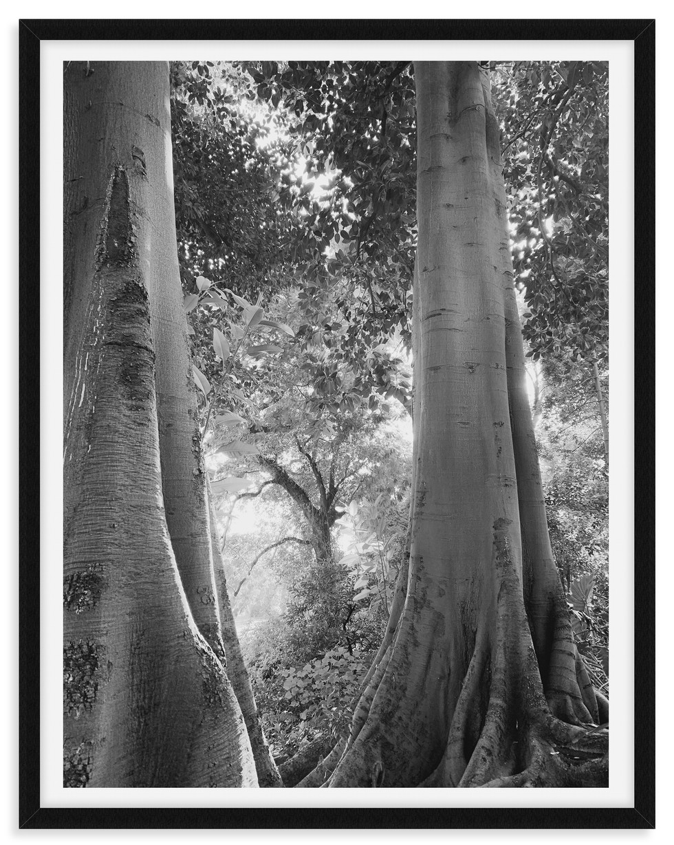 black and white forest trees wall art le