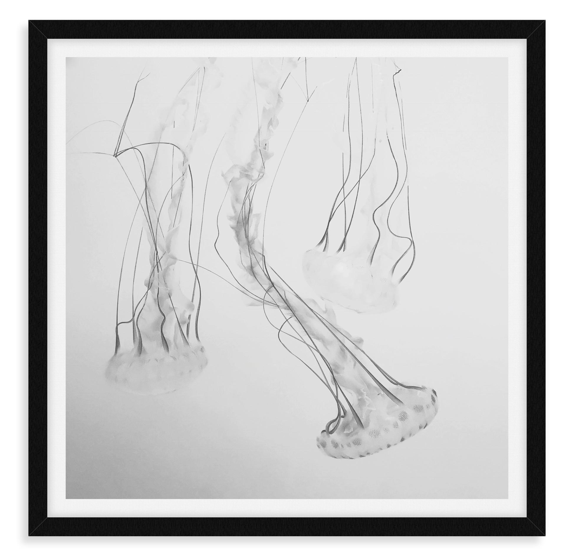 black and white 3 jellyfish underwater w