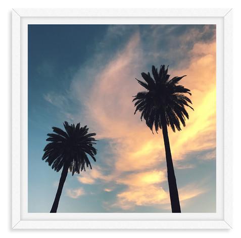 palm trees silhouettes california sunset