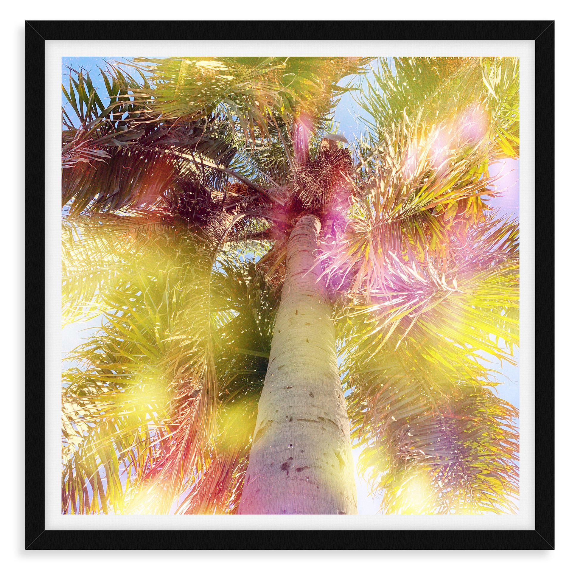 palm tree yellow pink light leak wall ar