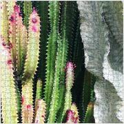 Rainbow Cactus 2