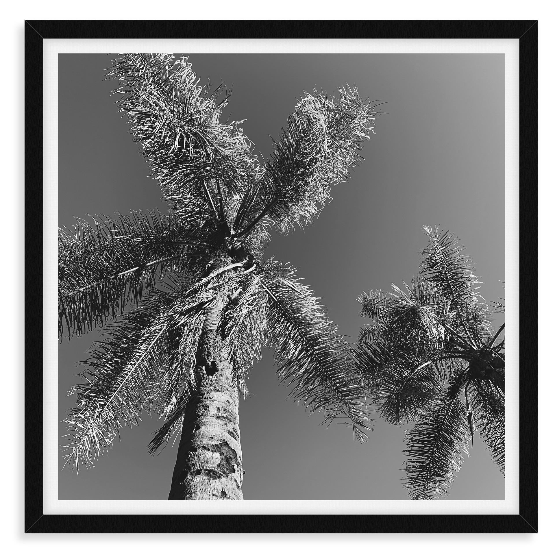 black and white pinwheel palm tree front