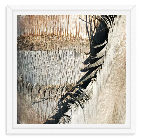 tree bark beige textured abstract wall a