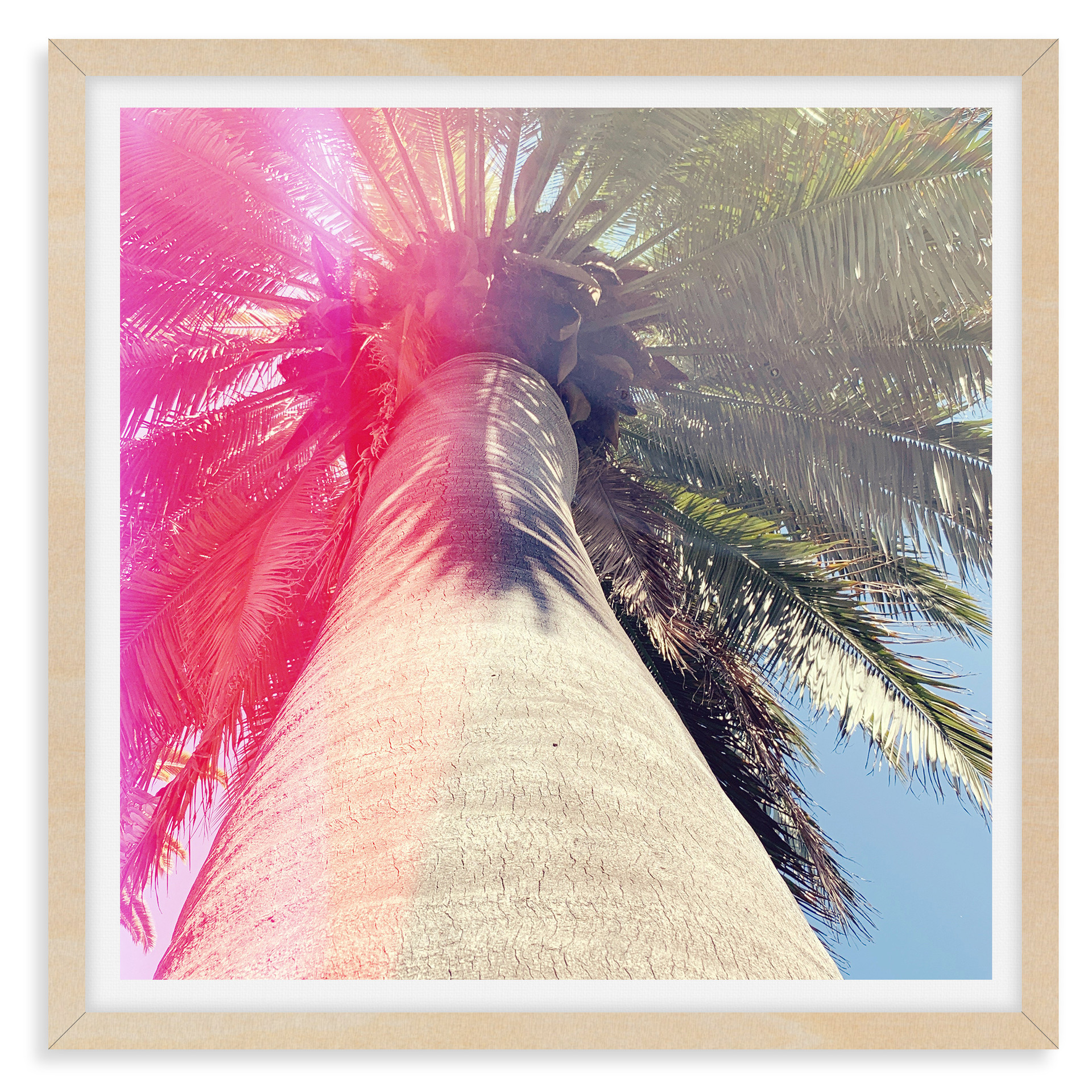 pink light palm tree wall art leasing lo