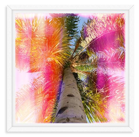 rainbown stripe palm tree pink orange wa