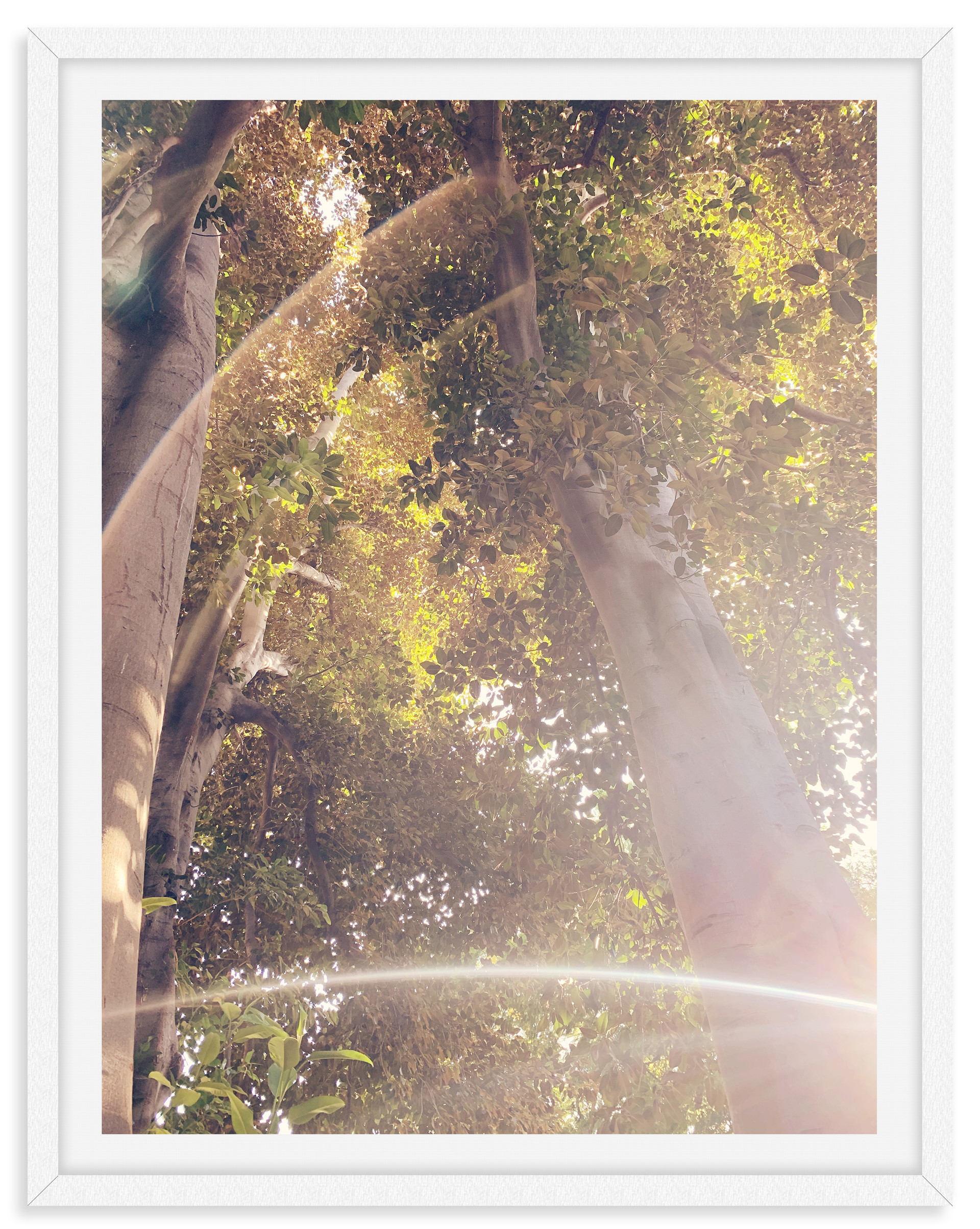 sunlight tree tops dreamy wall art leasi