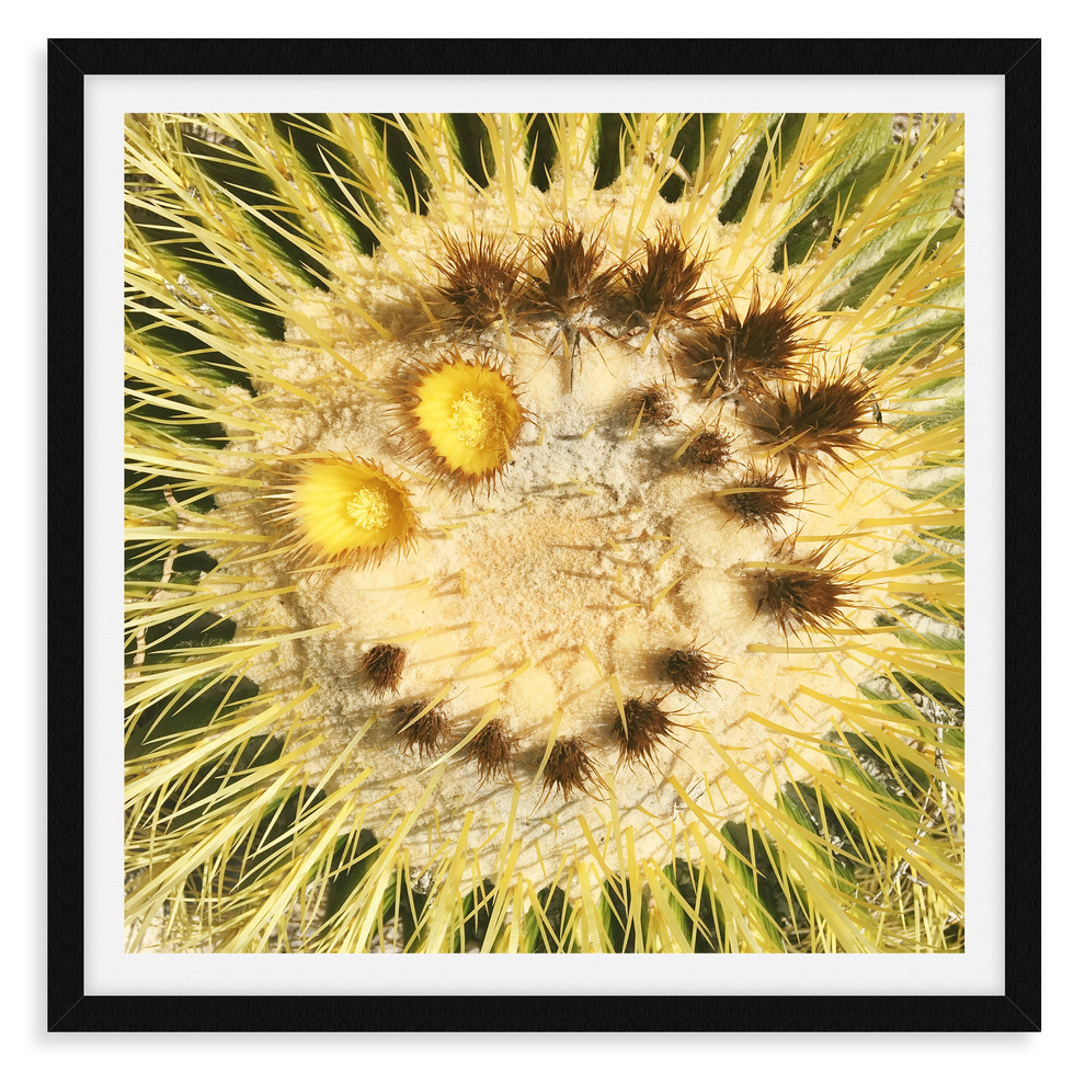 cactus yellow smile desert wall art leas