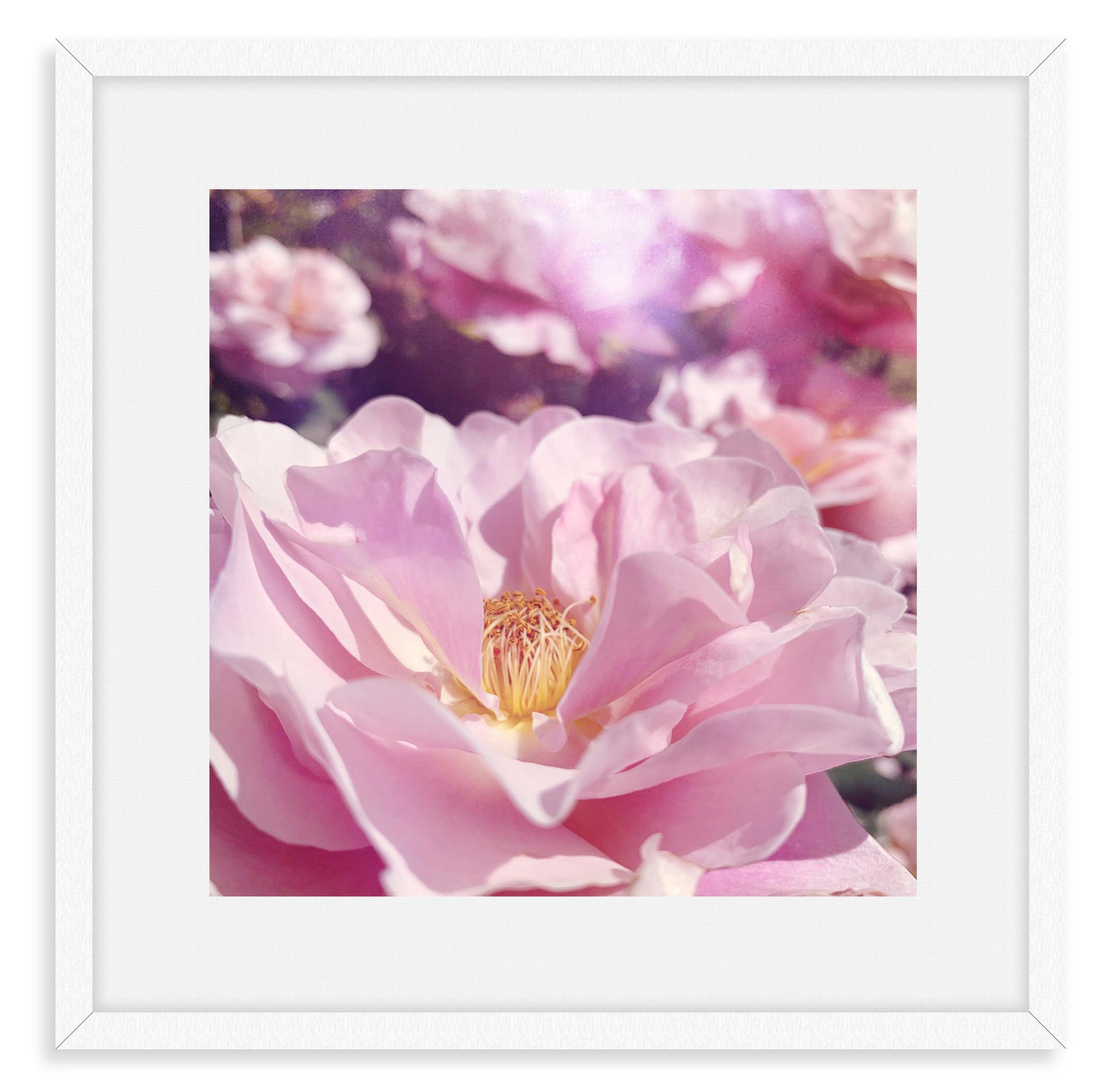 rose garden flowers dreamy lavender wall