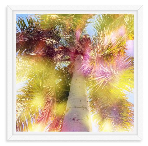palm tree yellow pink light leak wall ar