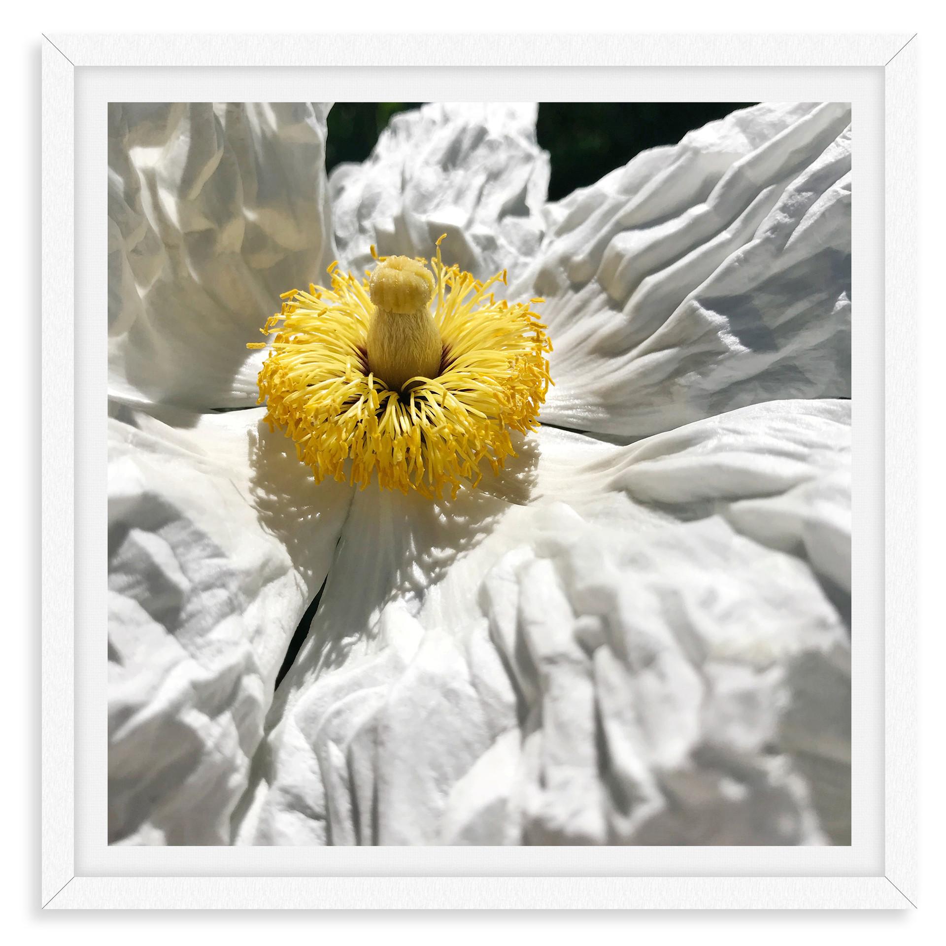white poppy flower still life wall art l