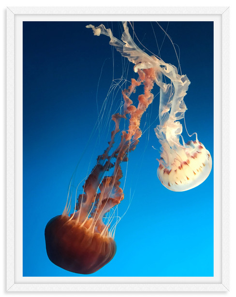 jellyfish underwater blue orange white d
