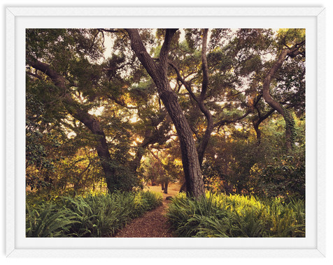 descanso garden trees forest wall art le
