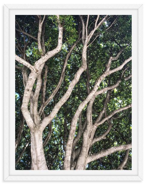 garden lush tree tops branches 2 wall ar