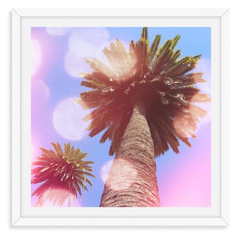 palm trees sunshine california sunset bu