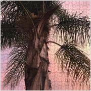 Palm Body