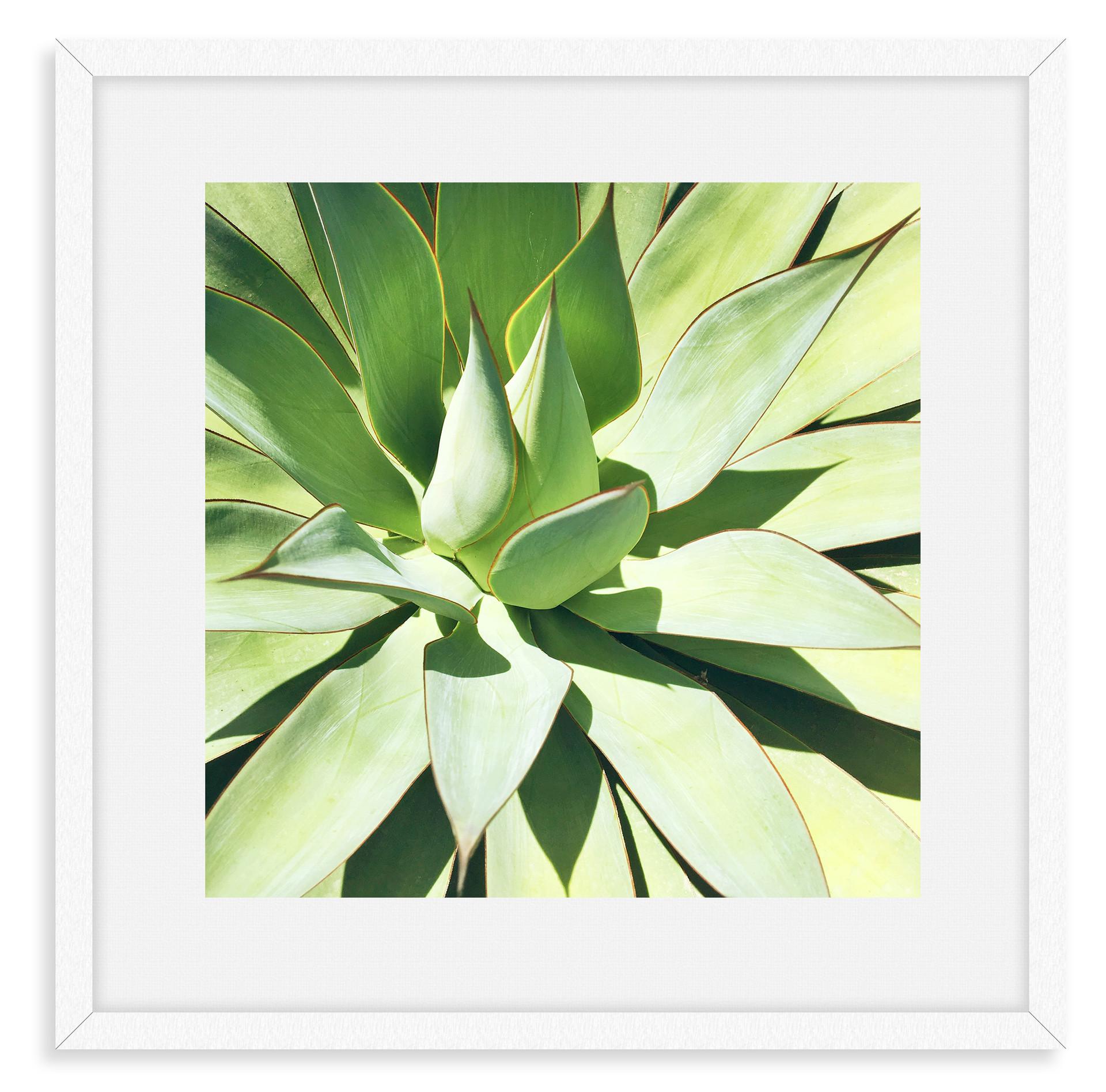 green aloe agave succulent wall art leas