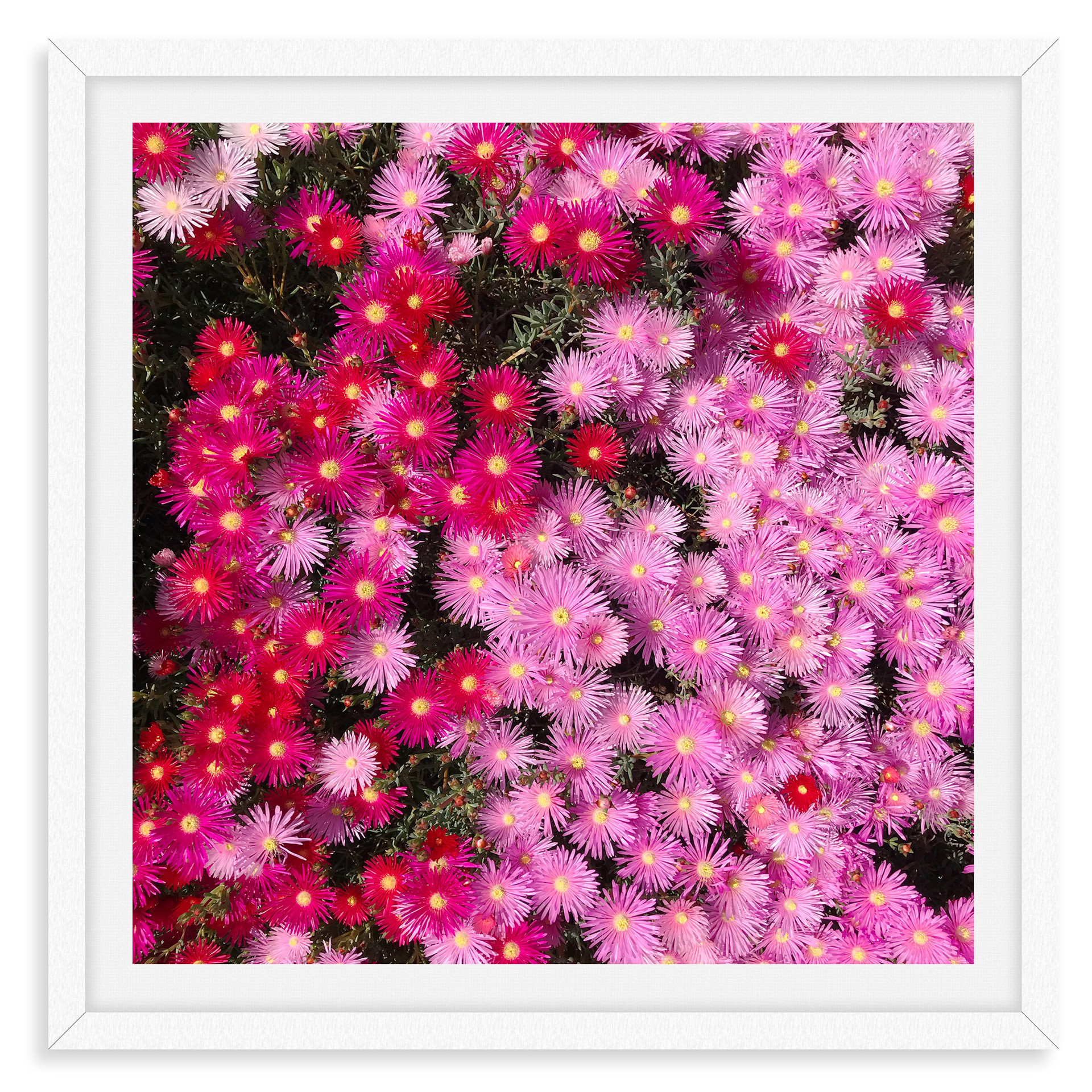 pink flowers two tone garden wall art le