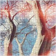 Tree Coven