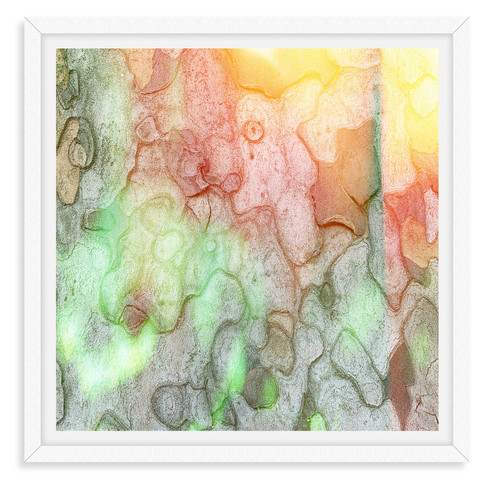 mystic sycamore tree bark spotted light