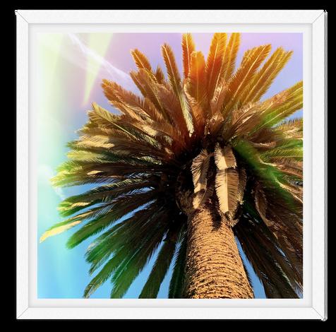 rainbow cosmic palm tree wall art leasin