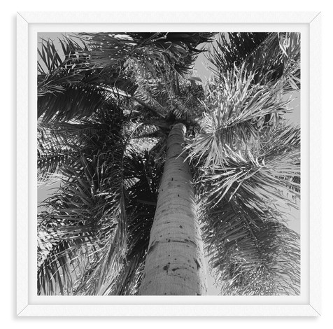 black and white palm tree fronds close u