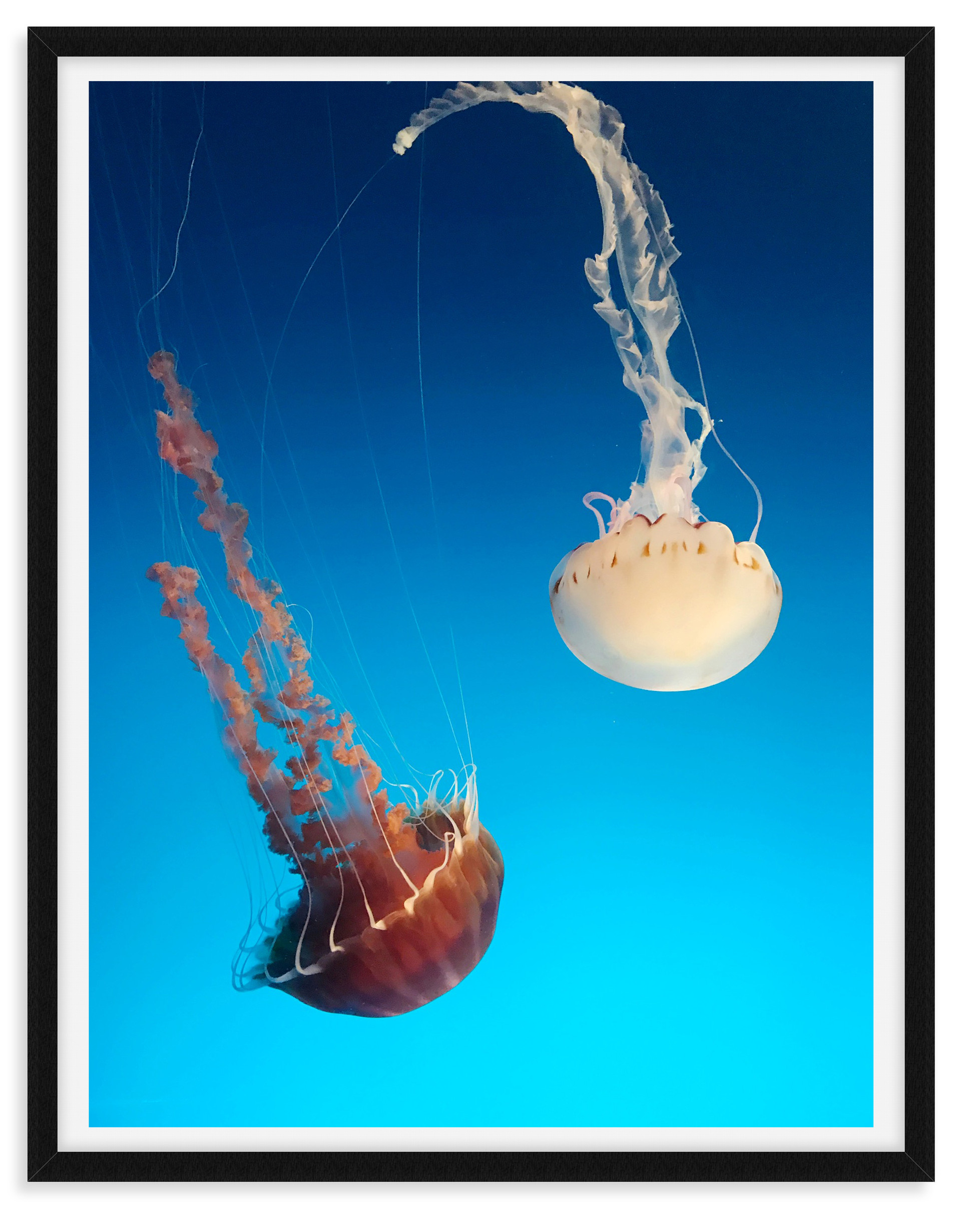 jellyfish underwater blue orange white w