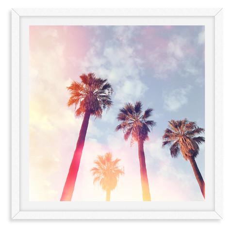 palm tree sunshine california sunset wal