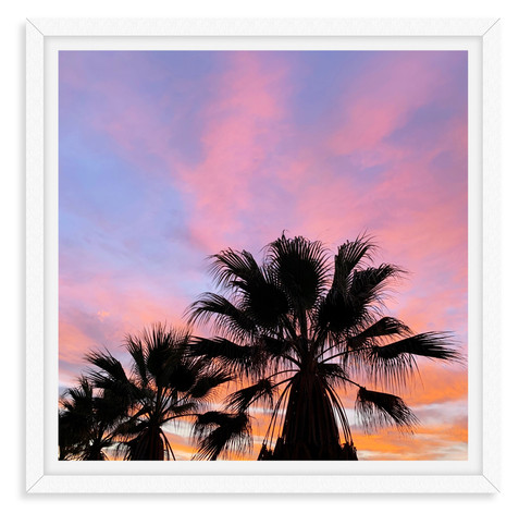 pink purple sunset palm tree silhouette