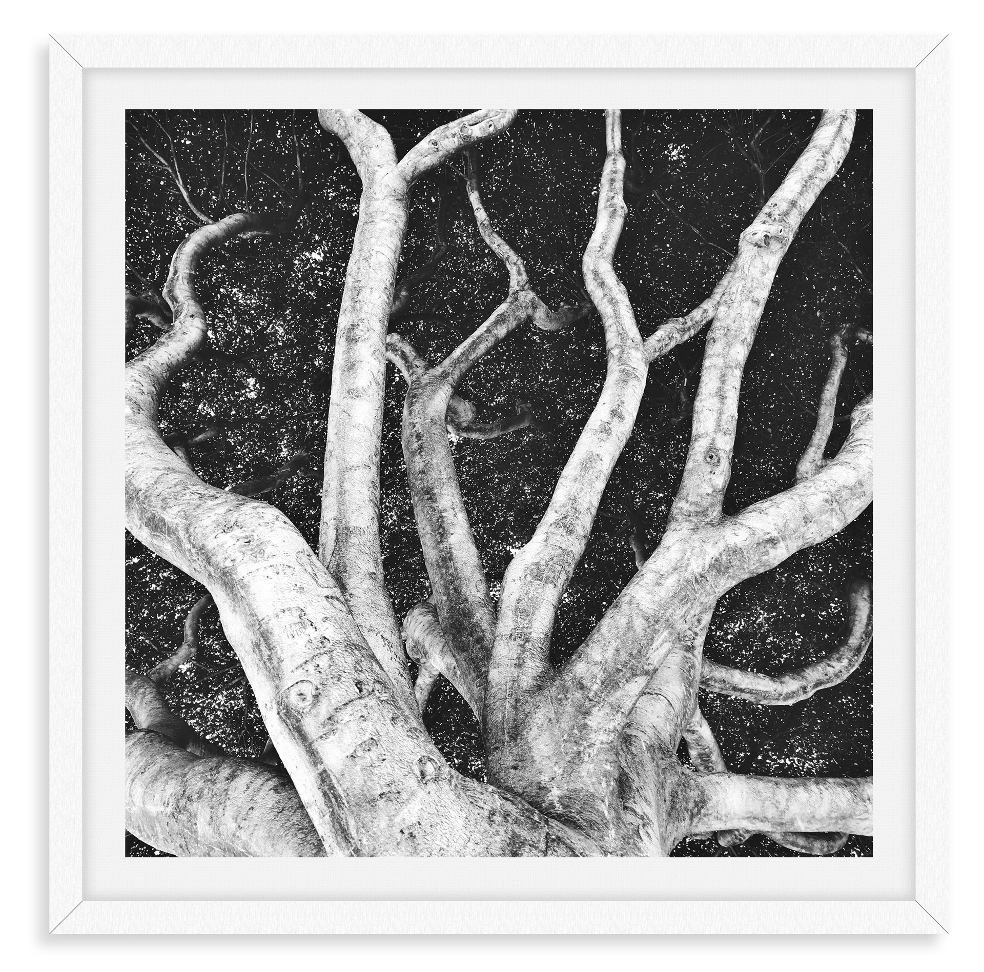 black and white tree octopus wall art le