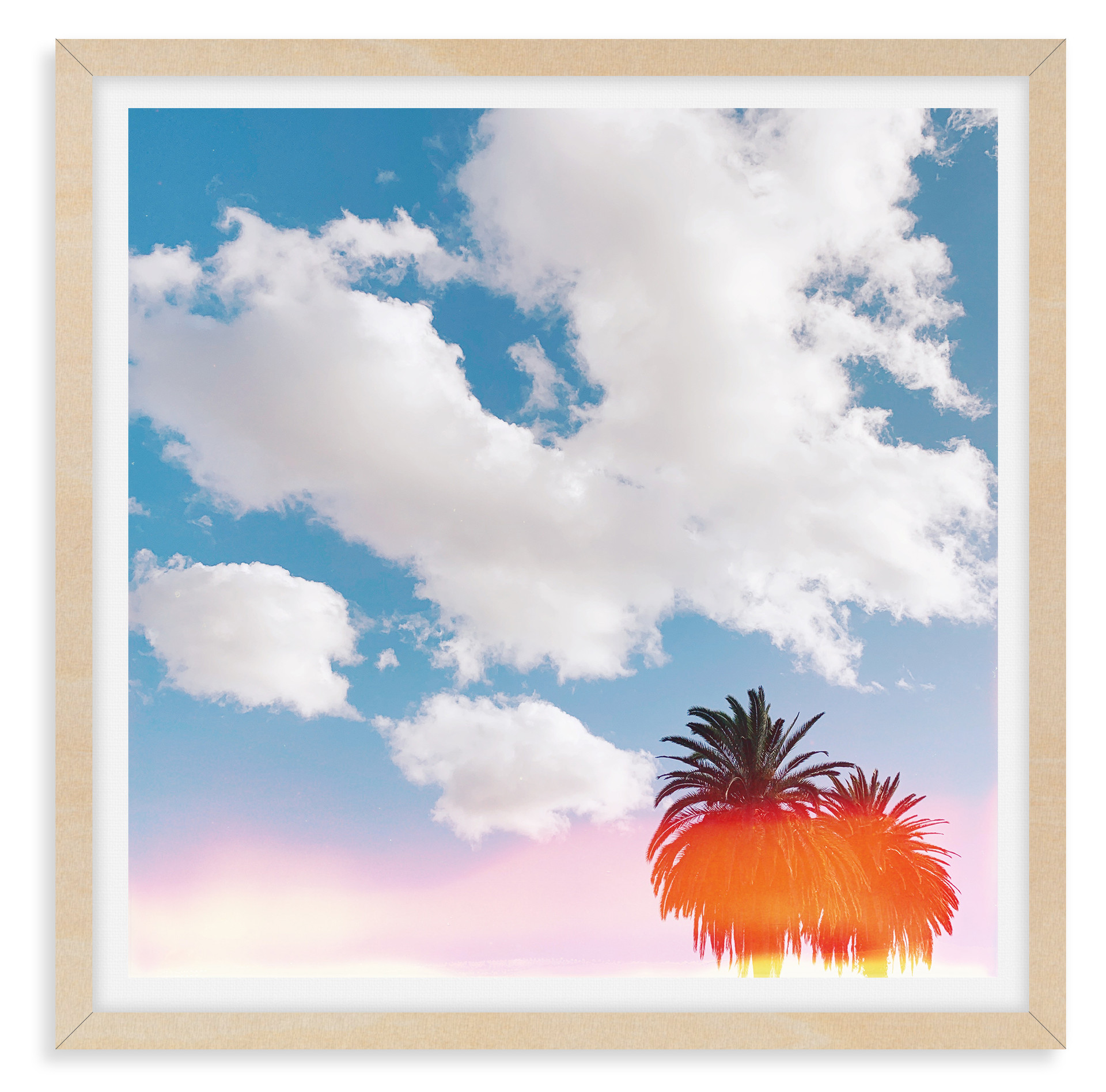 cloudy light leak palm tree california w