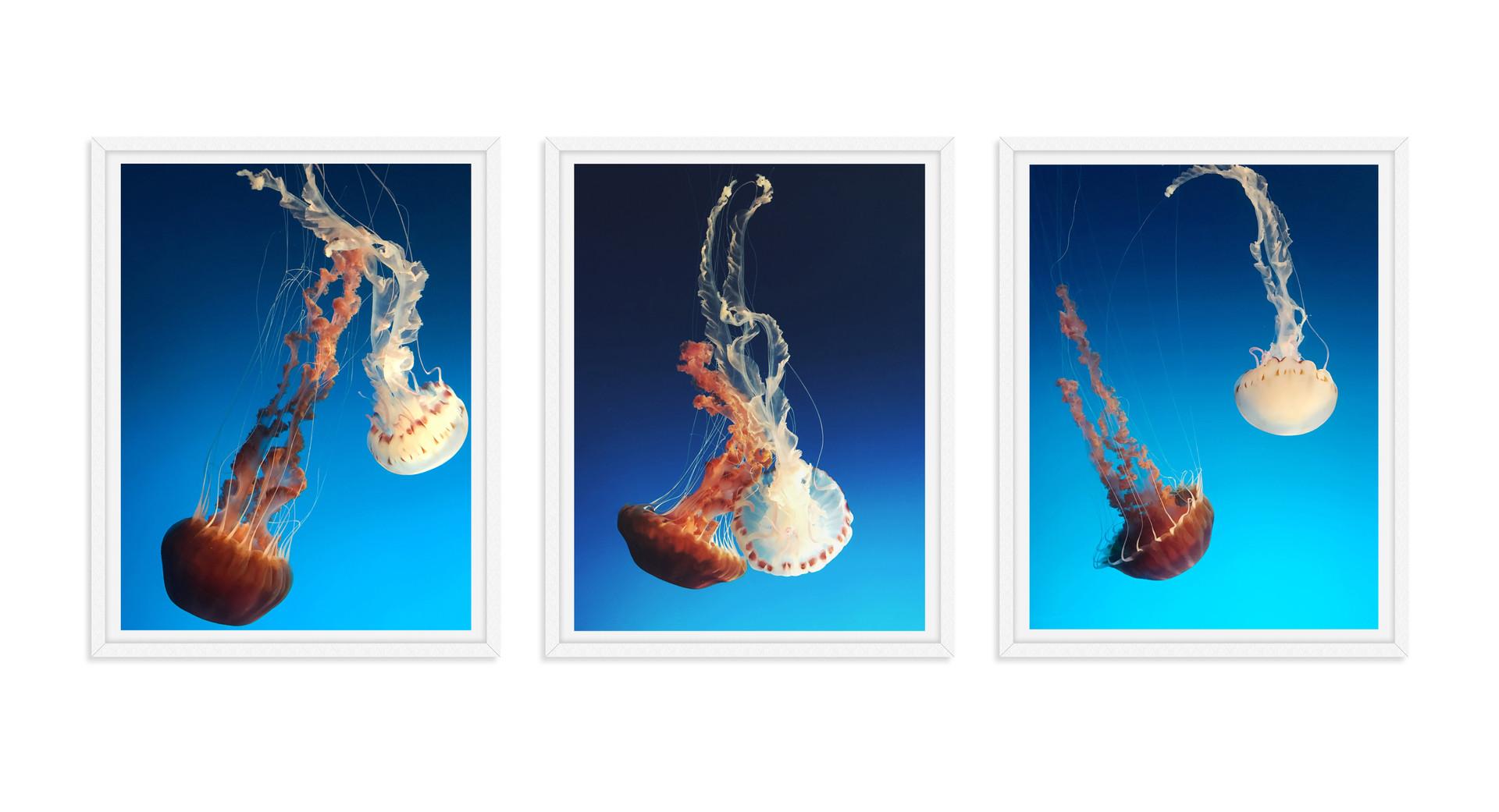 jellyfish red white blue underwater phot
