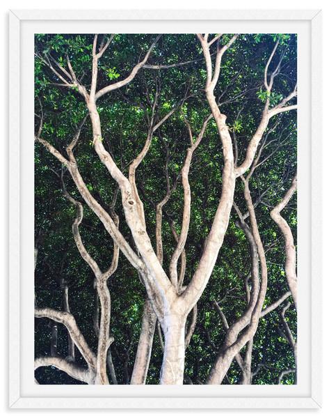 garden lush tree tops branches wall art