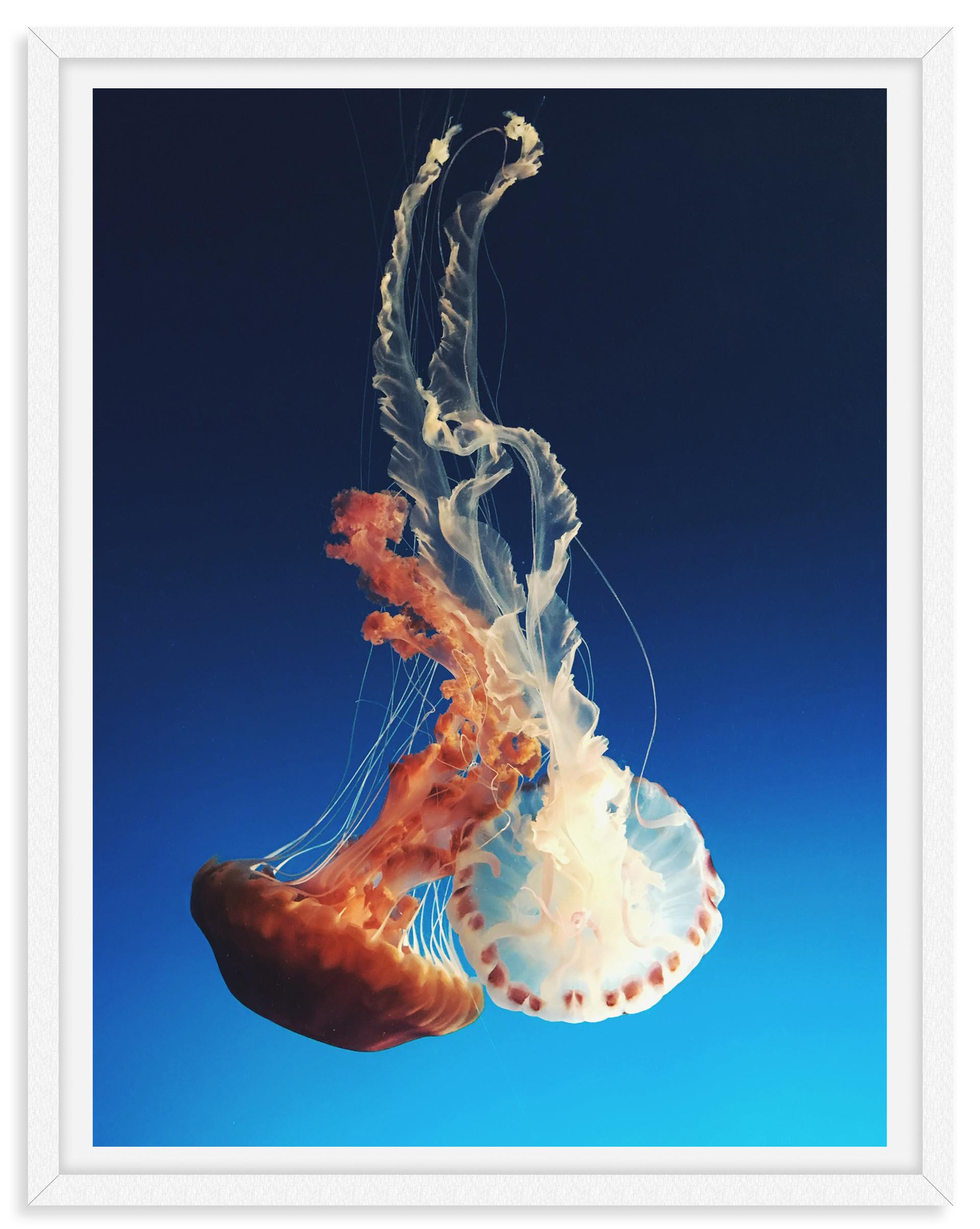 jellyfish underwater blue orange white p