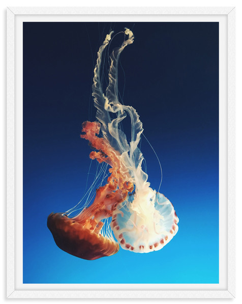 jellyfish underwater blue orange white p