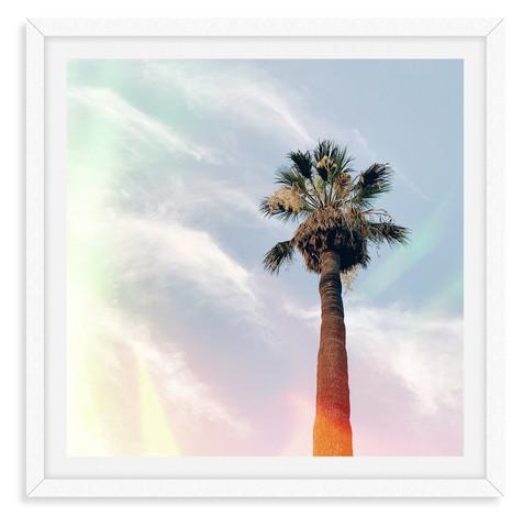 single palm tree sunshine california sun