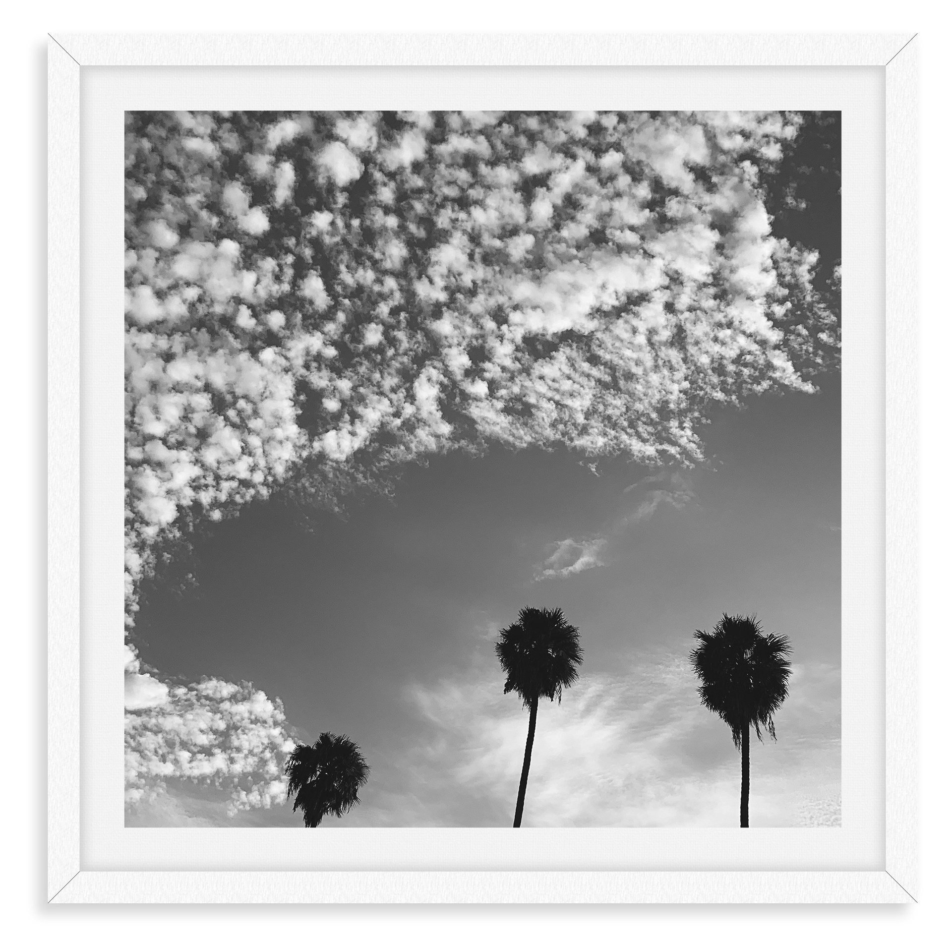 black and white palm tree clouds 3 wall