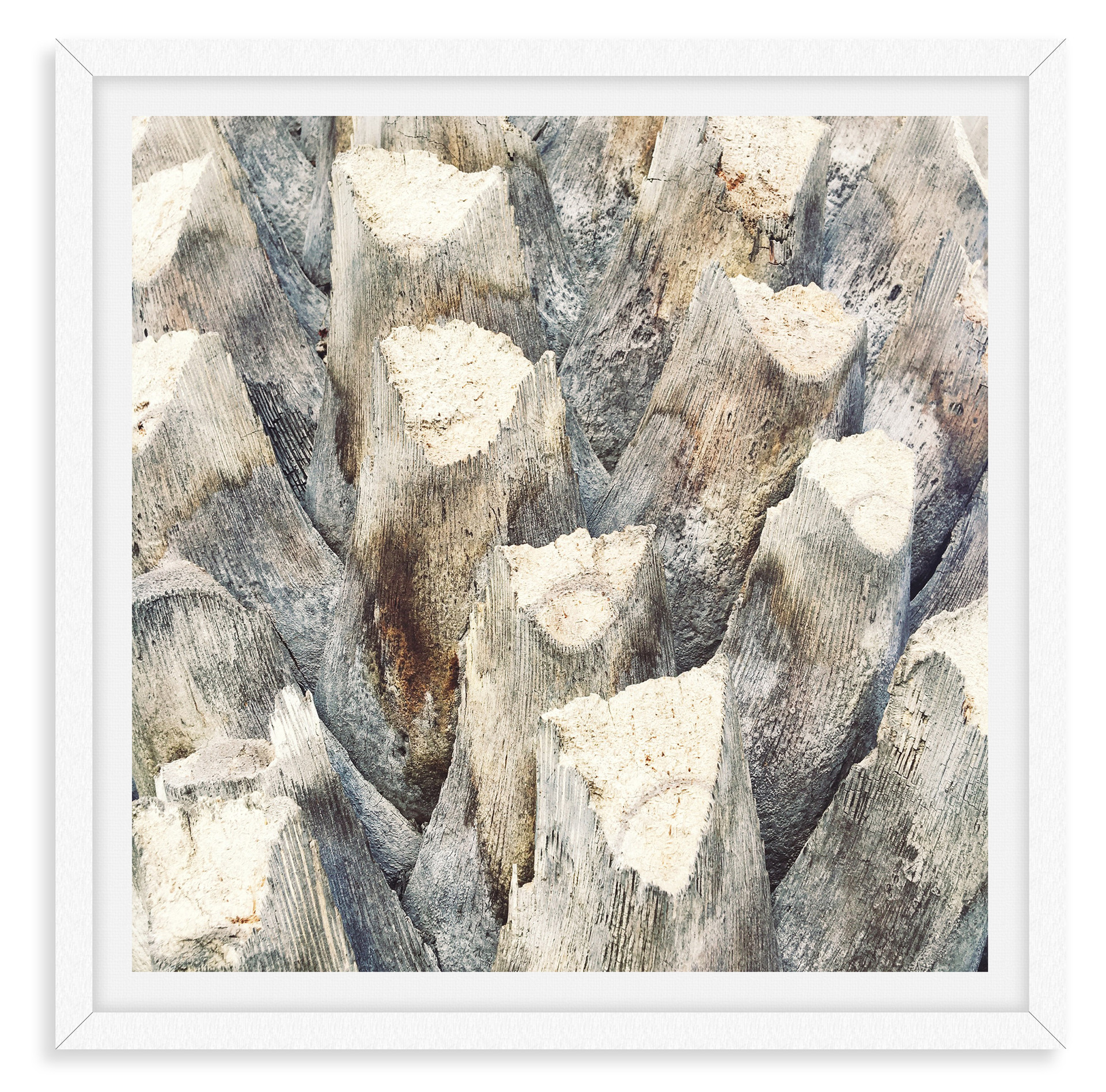 tree bark beige textured abstract close