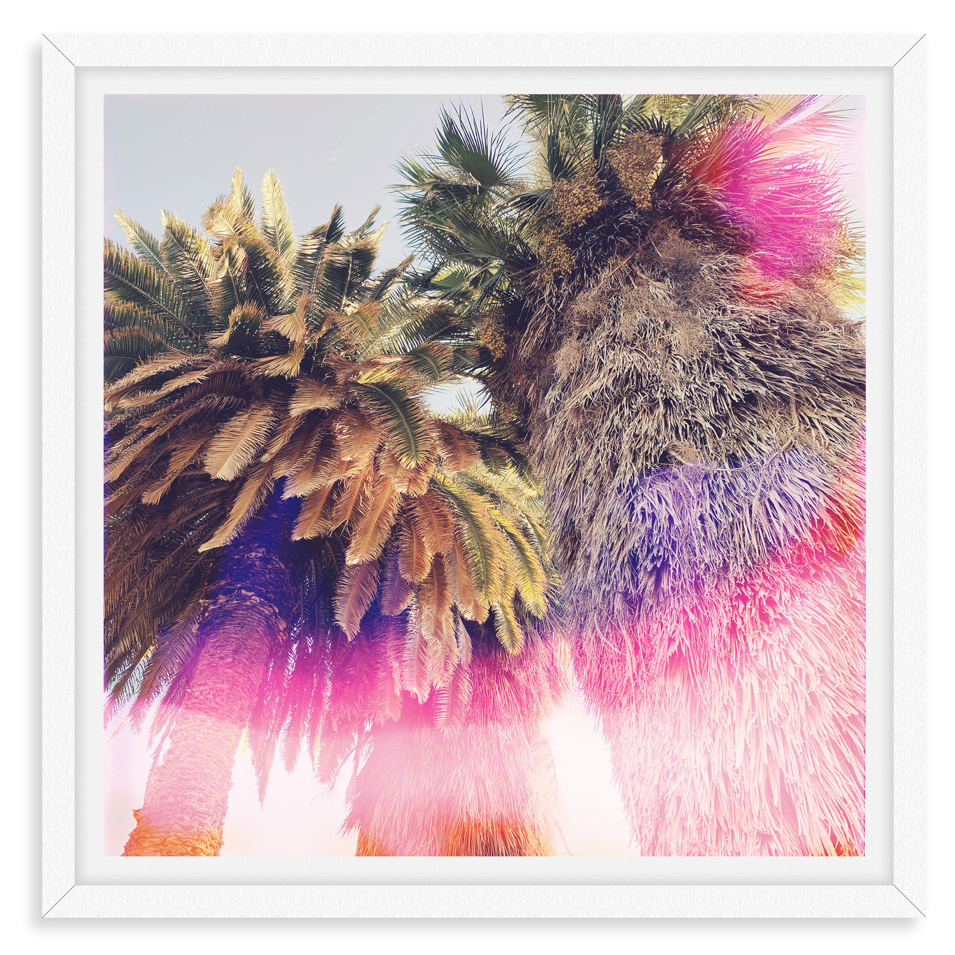 colorful pink purple palm tree abstract