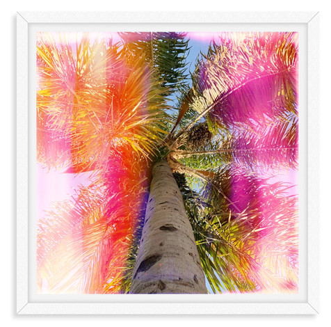rainbown stripe palm tree pink orange wa