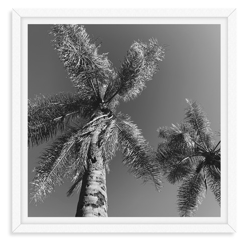 black and white pinwheel palm tree front