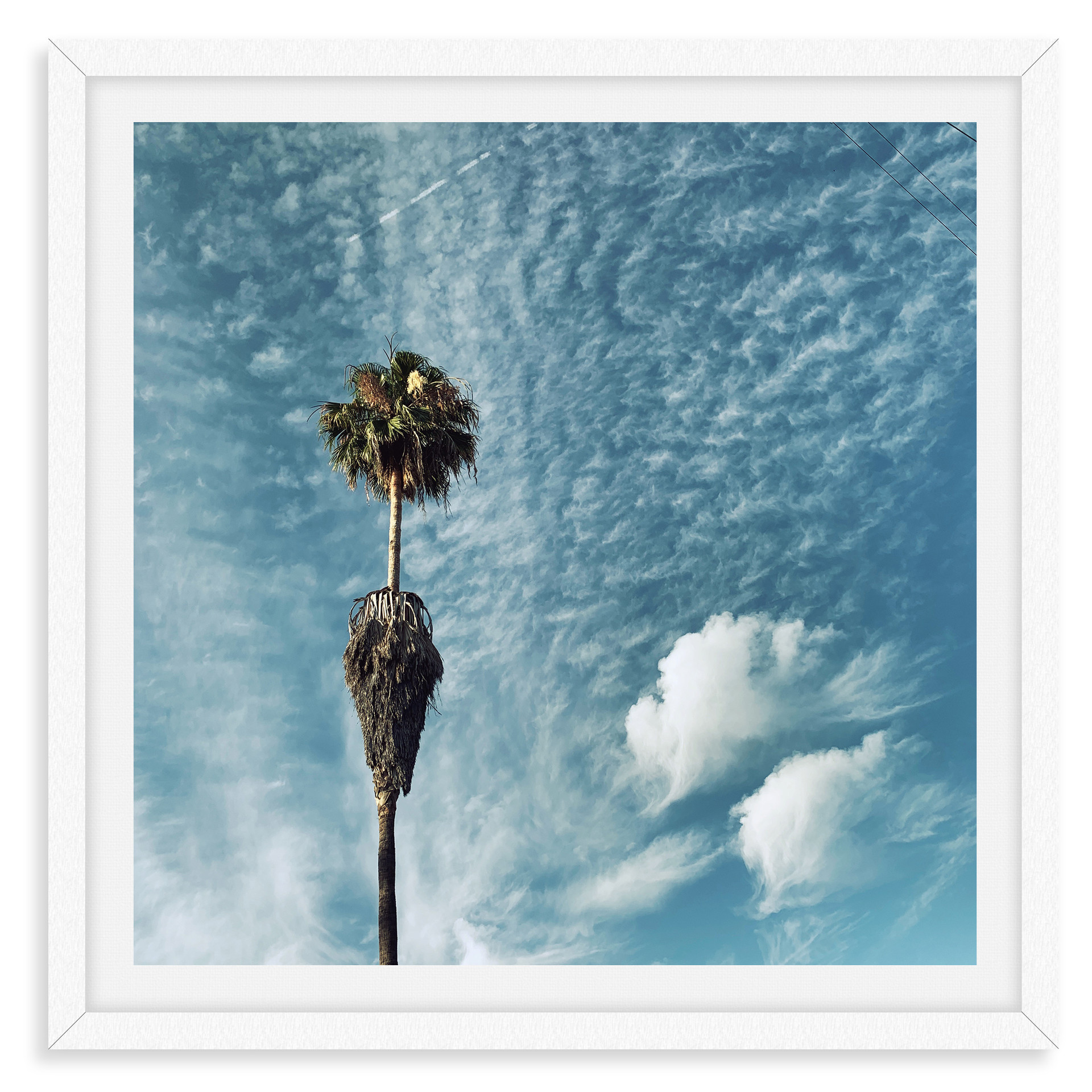 blue sky palm tree clouds wall art leasi